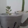 Macetas con planta